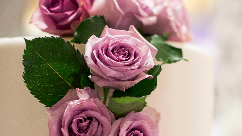 https://cdn.jumeirah.com/-/mediadh/DH/Hospitality/Jumeirah/Occasion/Dubai/Creekside-Wedding/16-9_Jumeirah-Creekside-Hotel-Weddings-Cake-Detail.jpg?h=1620&w=2880&hash=C72A8EADE98F025221980B725B75AE12