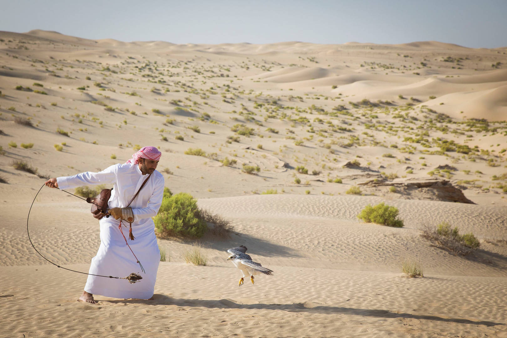 Man training the falcon