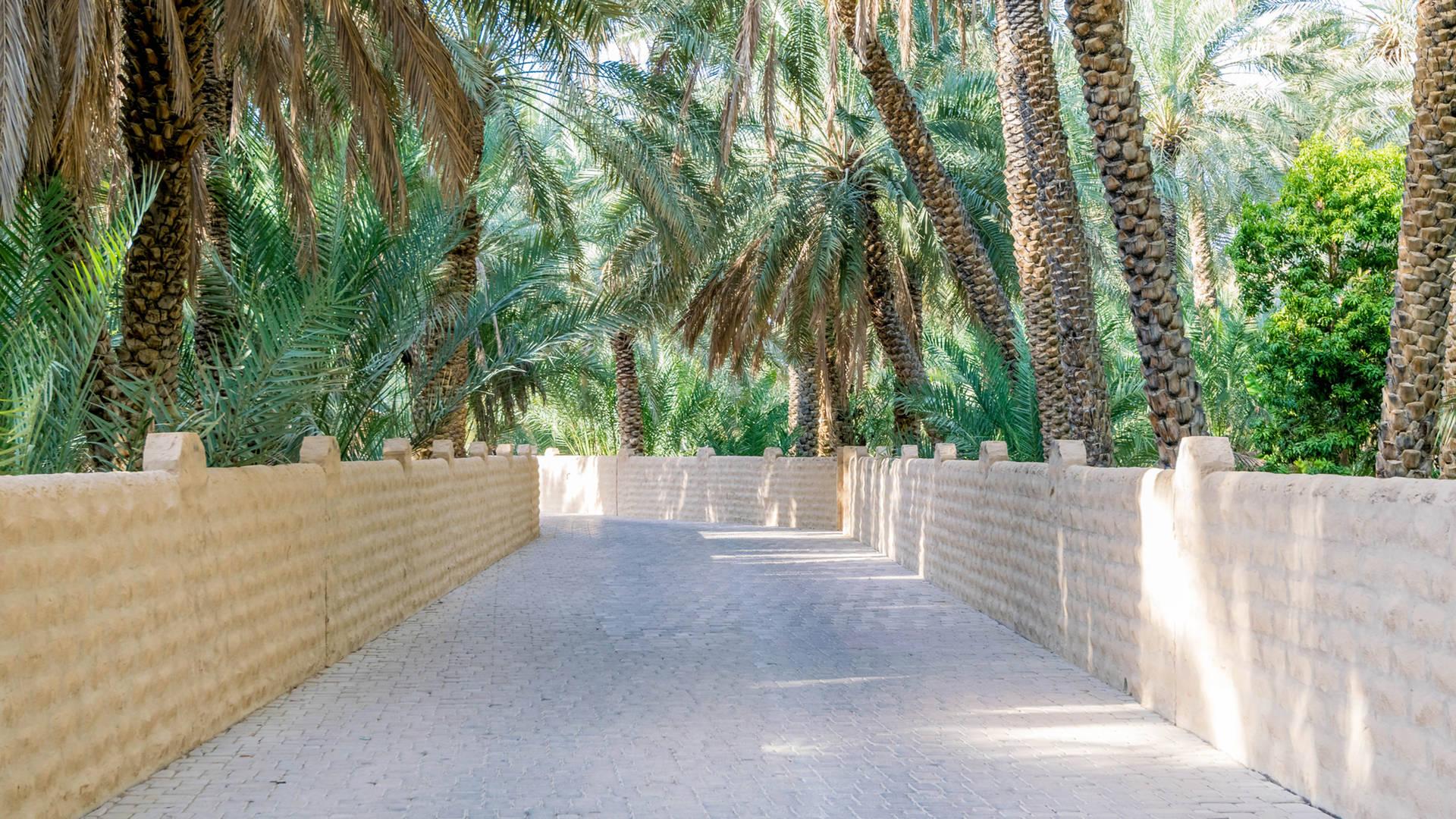 Al Ain oasis Abu Dhabi day trip