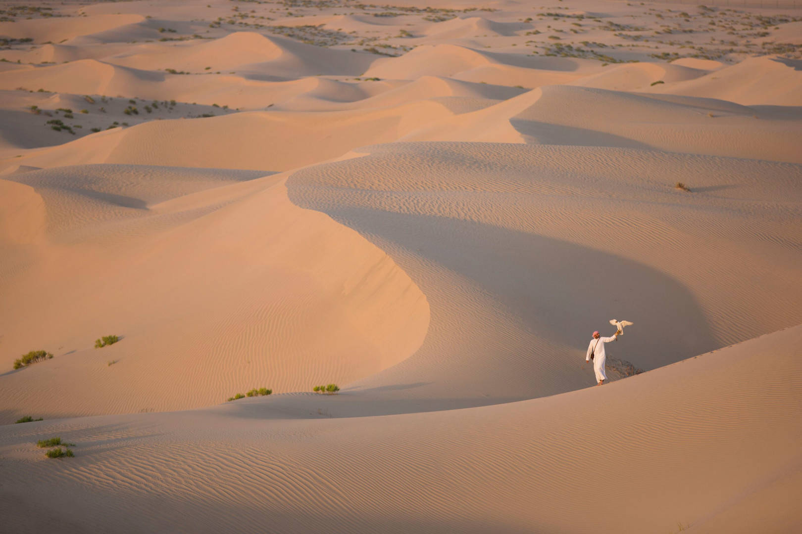 Man with a falcon on the desert