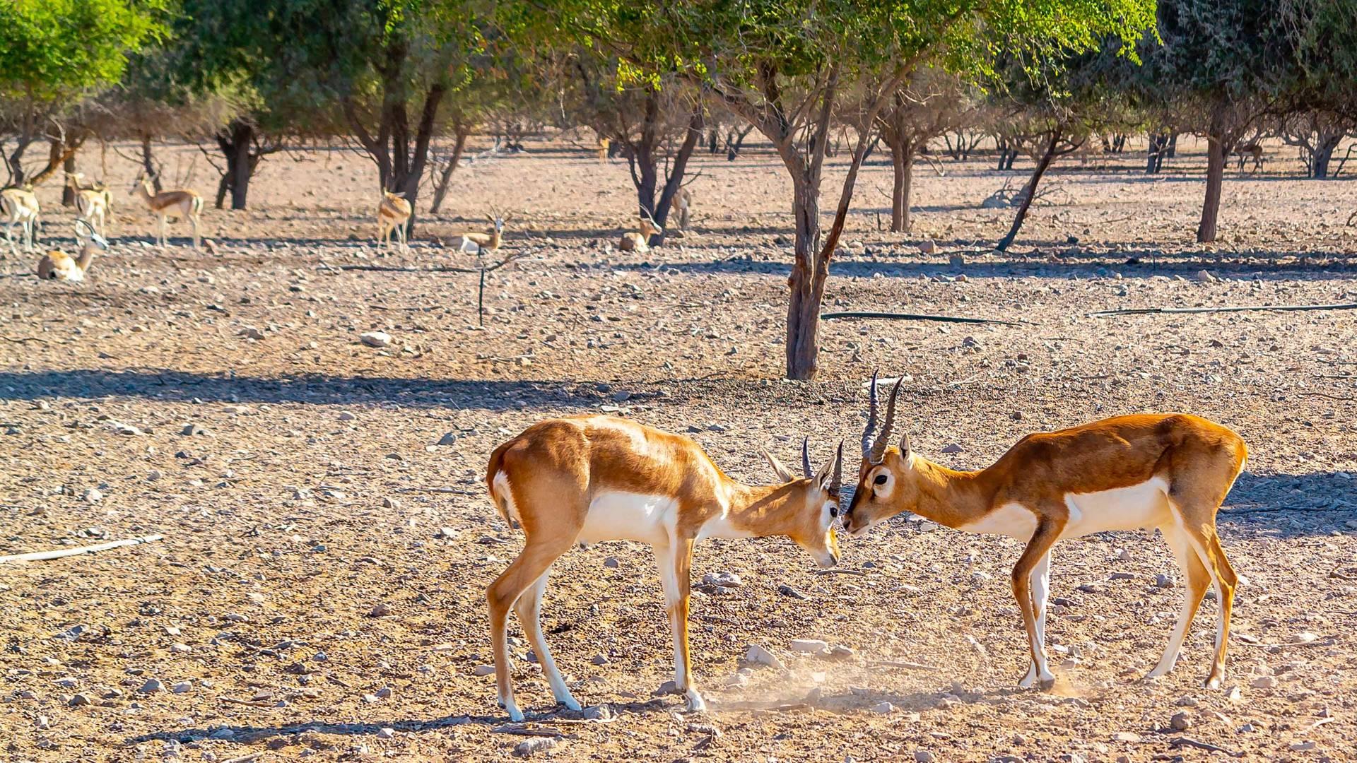 wildlife wild abu dhabi