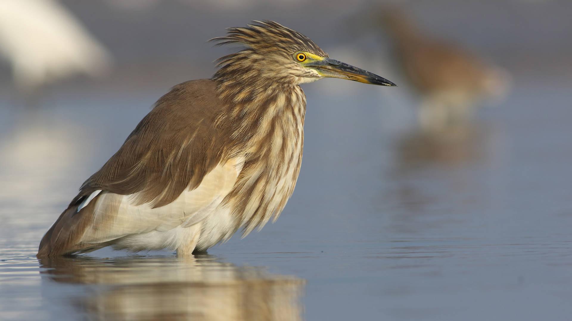 heron reasons to visit Dubai