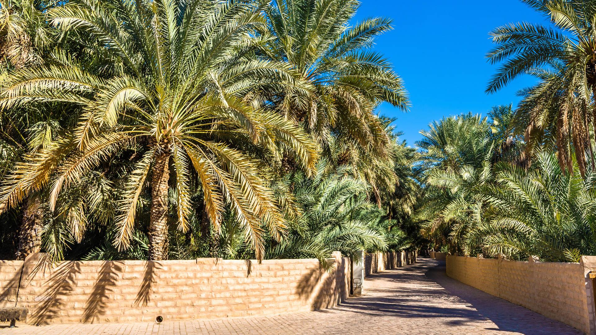 Al Ain oasis pathways