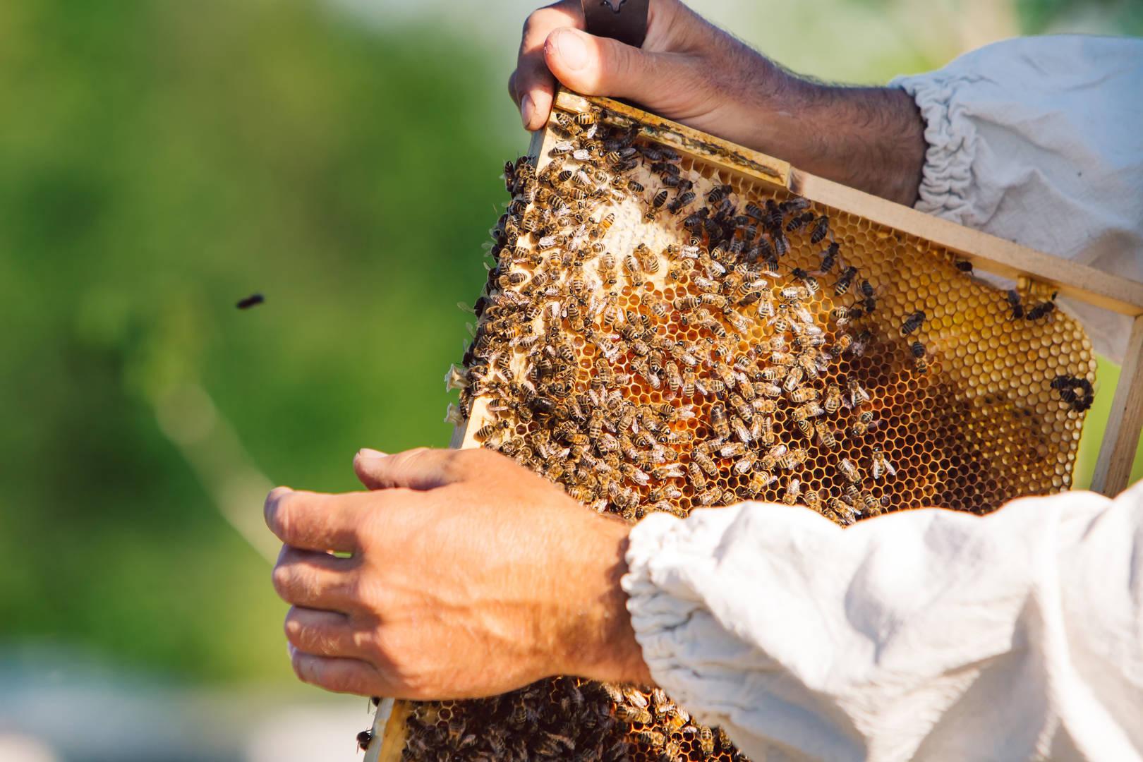 Animal adventures in Hatta honeybee farm
