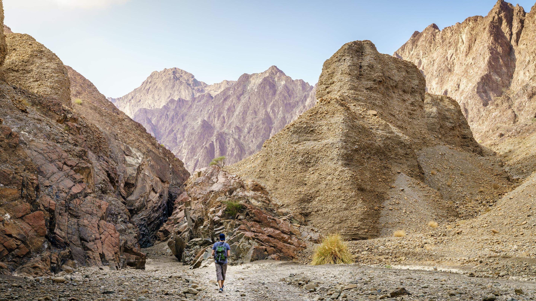 Animal adventures in Hatta hiking mountains