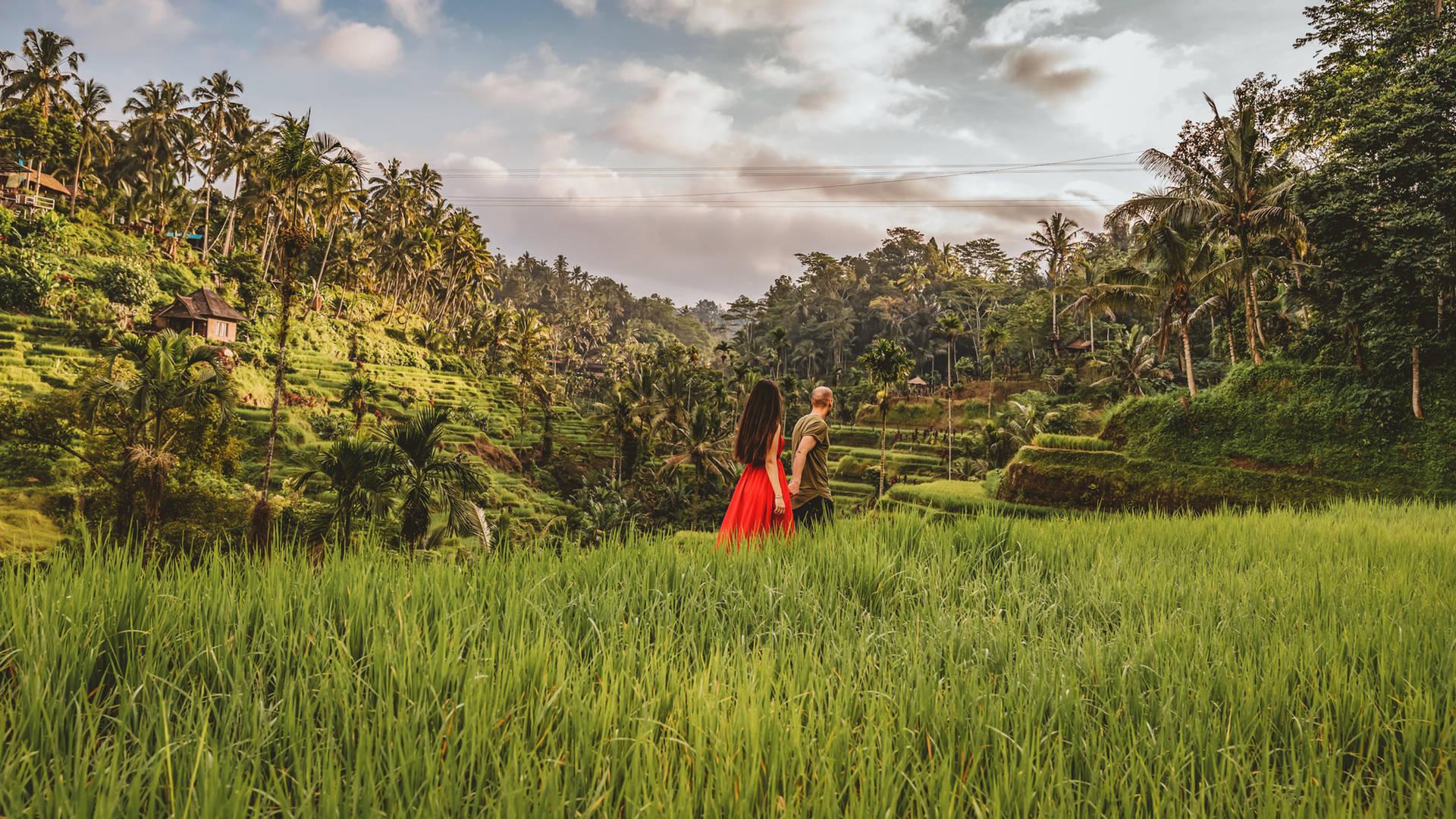 Emerald green rice paddies in Bali
