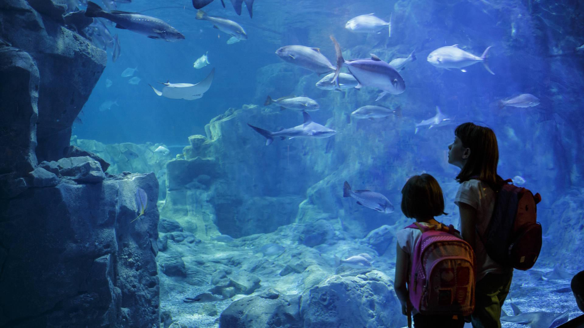 Aquarium Kuwait