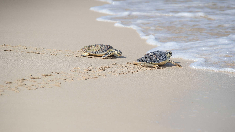 Generic---Activites---Turtle